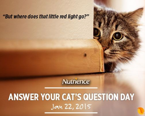 If only our #cats could talk...what would your #NutriencePet ask?