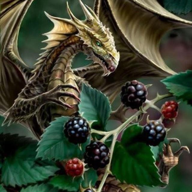 Dragon berries?!: Fairies, Fingers, Fantasy Art, Little Dragon, Gifts Shops, Anne Stokes, Blackberries Dragon, Dragon Art, Dragon Illustrations