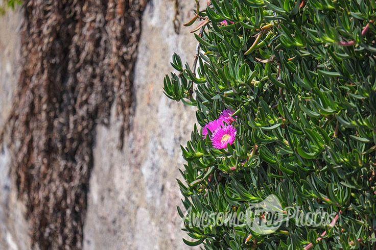 68-awesomefreephotos-flowers-wall-street-750