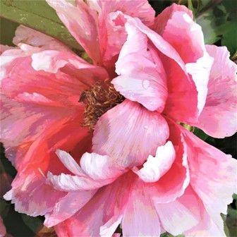 #roze bloem #natuurfotografie #kunstfotografie #bloemen #natuur #tuin #garden