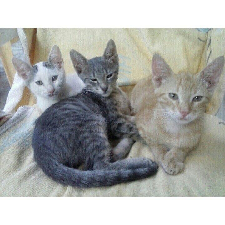Χαρίζονται γατάκια αδελφάκια,  πολύ παιχνιδιάρικα, ήσυχα και πολύ χαριτωμένα. Ζητάνε ένα σπιτάκι   Τηλέφωνο επικοινωνίας: 693-6256743 (Ρούλα)