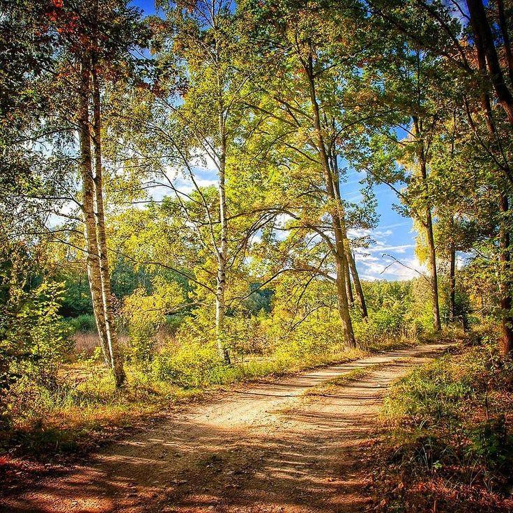 Gdzie chciałbym spędzić jesień? Na Pojezierzu Brodnickim. To okolica pełna takich uroczych zakątków jak ta droga zagubiona gdzieś w lasach w okolicy Górzna. Przepiękne lasy liściaste właśnie teraz nabierają złotych barw które malowniczo odbijają się w wodach jezior. Całym dniami można tam włóczyć się po po tym całkiem sporym terenie ciągłe odkrywając jego zakamarki.  #jesień #jesien #fall #autumn #leaves #falltime #season #seasons #instafall #instagood #TFLers #instaautumn #photooftheday…