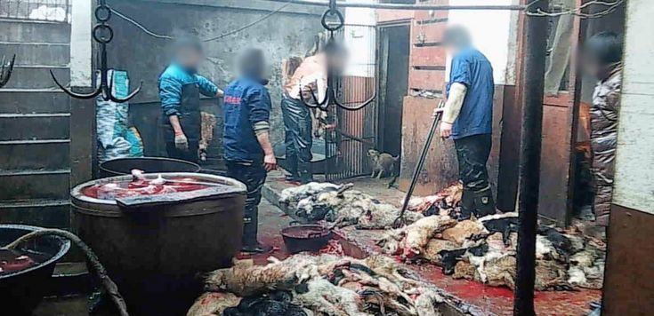 Dogs Bludgeoned and Killed in Leather Industry
