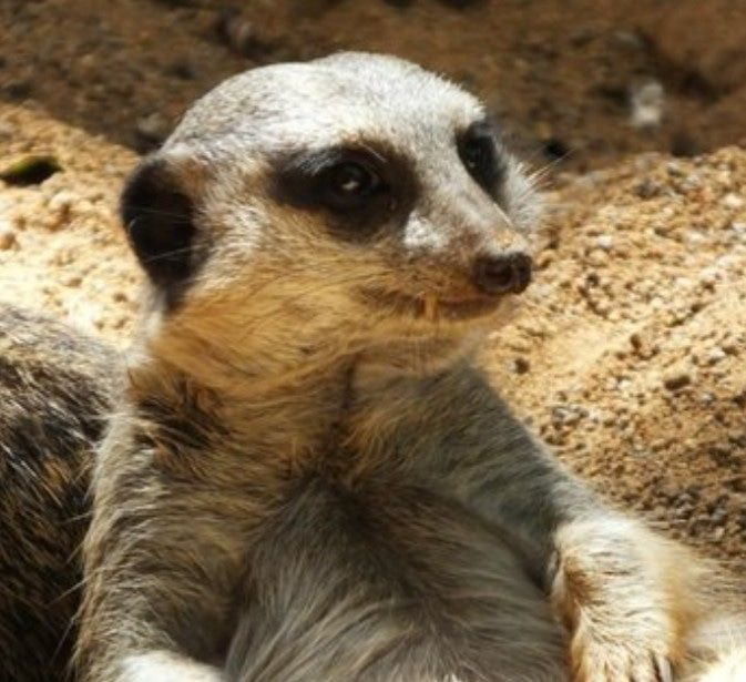 ホノルル動物園のかわいい動物さん集まれ 動物 かわいい 動物 動物園