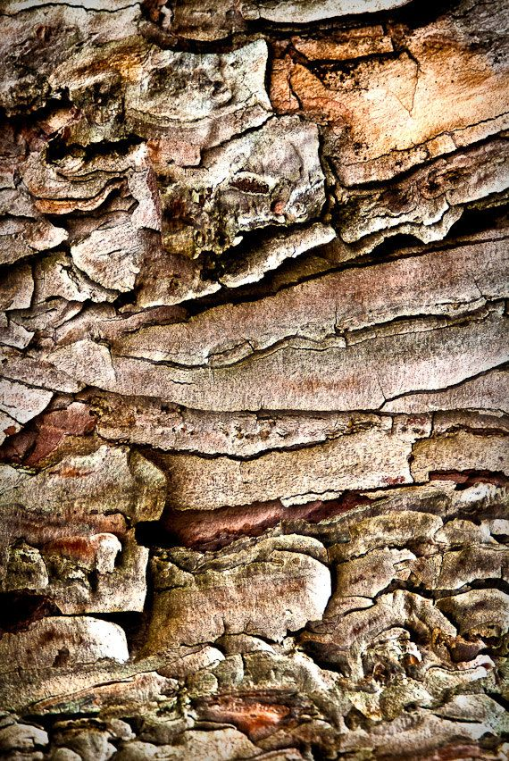 Tree Bark Abstract - nature can be so inspirational