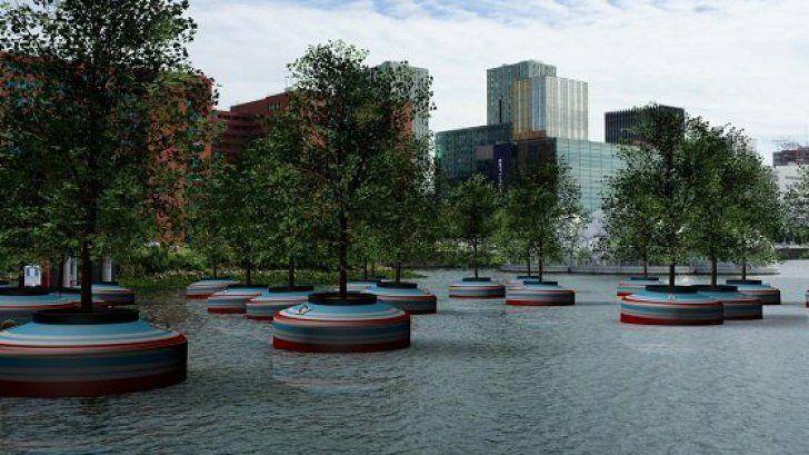 Prima pădure plutitoare din lume