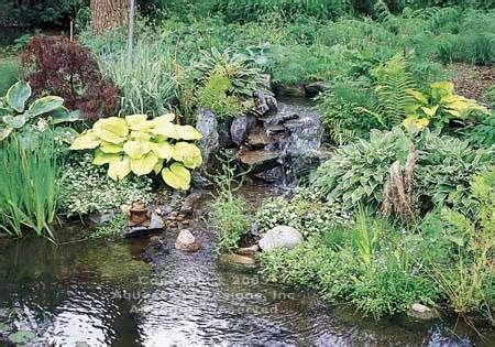 78 Best Images About Pond Health Through Plants From