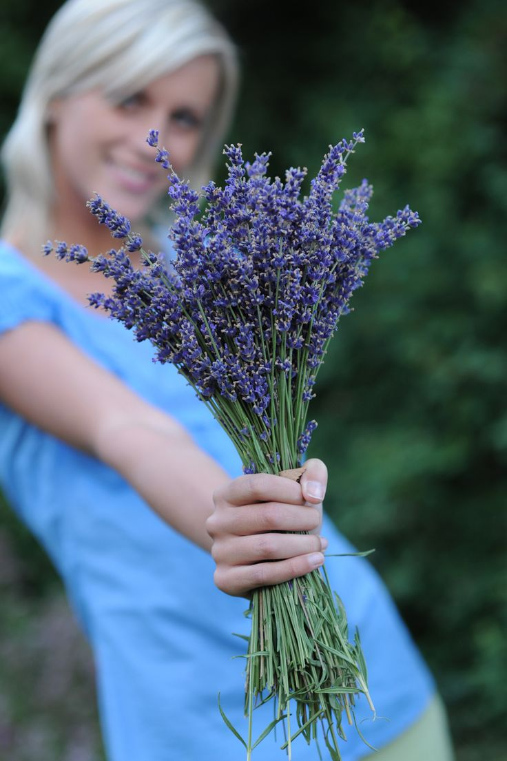 lavender | Lavender Essential Oil.....on my agenda......planting some today........
