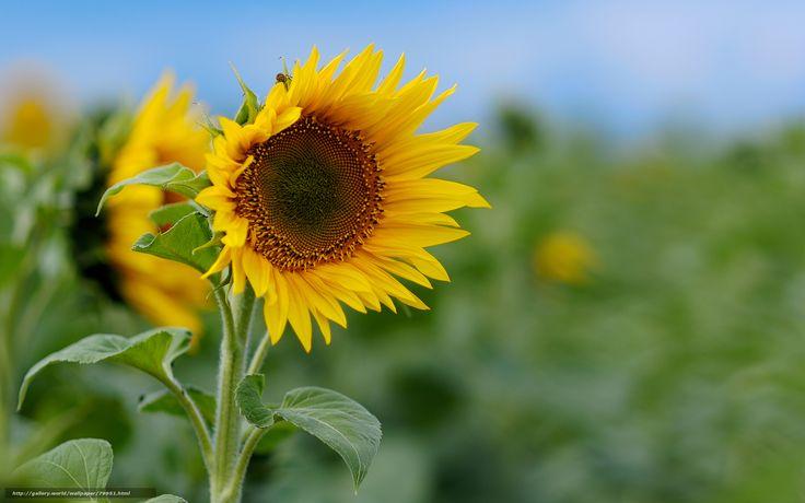 Foto Gratis Flores Fondo Naturaleza: Descargar Gratis Flores, Fotografas En Primer Plano