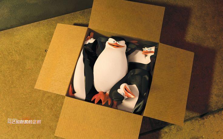 Фото: Пингвины Мадагаскара