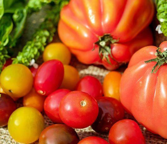 causas de acido urico elevado en ninos es malo comer tomate para la gota niveles normales del acido urico en sangre