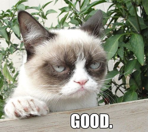 17 Best images about Grumpy Cat on Pinterest | I like you ...