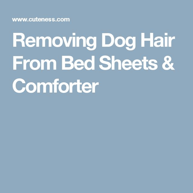 Removing Dog Hair From Bed Sheets & Comforter
