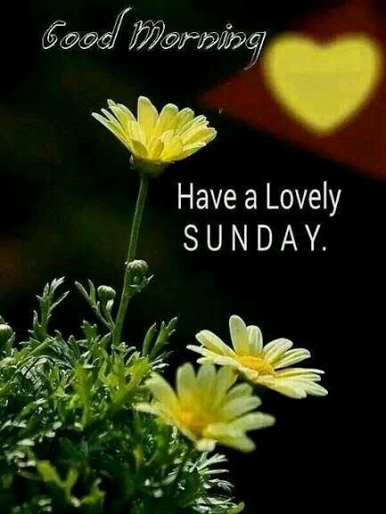 Good Morning Have a Lovely Sunday!
