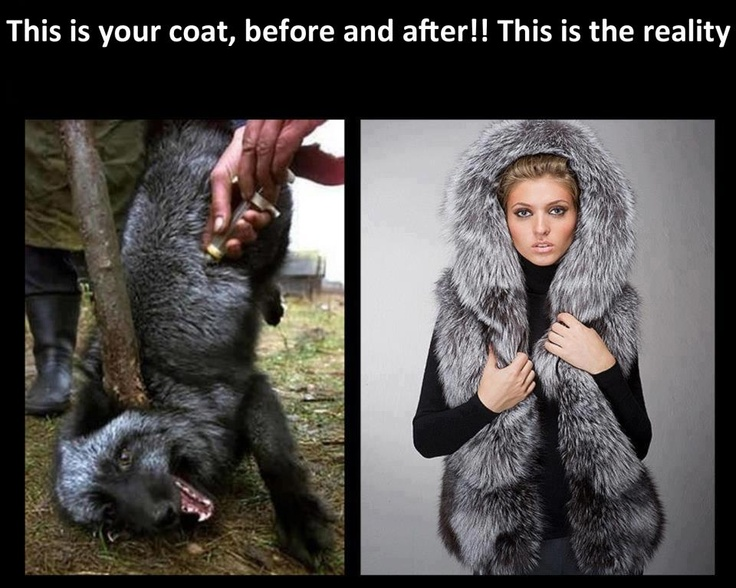 killing animals for their fur Rspca australia is opposed to the use of any animal where the purpose of their death is primarily to produce a non-essential luxury item like fur or skin.