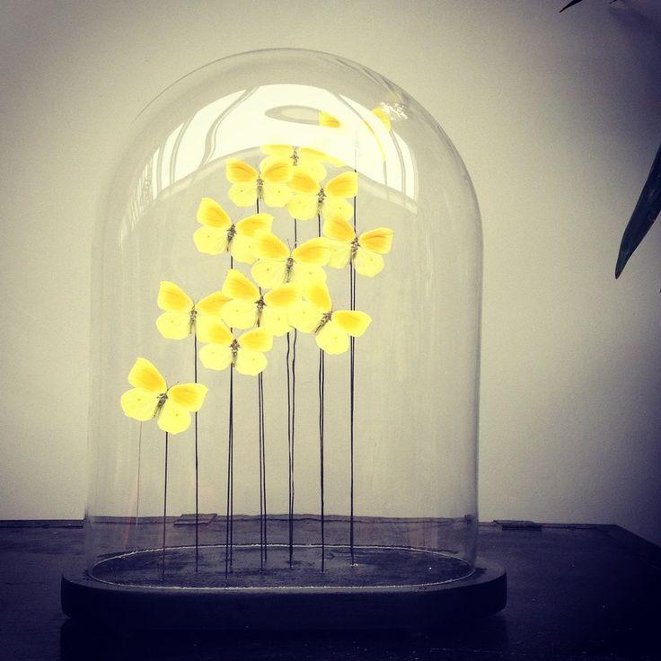 Image of Antieke Glazen Stolp met gele vlindertjes.