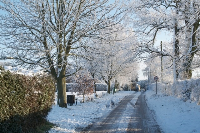 An avenue of snow and frost covered trees in Cross Street.