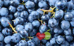 Os 6 Benefícios do Resveratrol das Uvas e Bagas