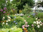 Irissen zijn geen bloemen die je snel over het hoofd ziet. Met hun lange stelen, frivole bloemen en uitbundige kleuren stelen ze de show in iedere tuin. Marianne en Freddy Joosten uit Rutten kweken zo'n 1500 verschillende soorten en weten precies hoe deze bloem op haar best is. Als showdanseressen vlak voor een optreden. Zo staan de irissen zachtjes te wiegen in de siertuin van kwekerij Joosten in Rutten. Statige danseressen in fladderende jurkjes van kleurrijke zijde.