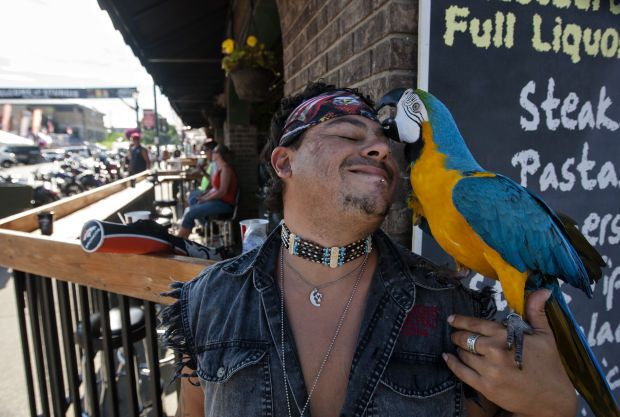 Check out our #Sturgis photos! You never know what to expect in a place like Sturgis! #BikersandBirds #macaw #MsBubba #serviceanimals #rally #motorcycle #LoudAmericanRoadhouse