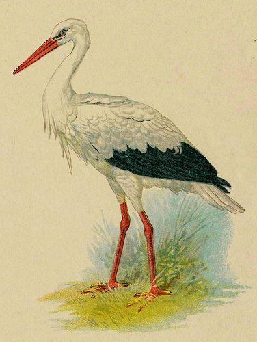 Audubon Christmas Cards