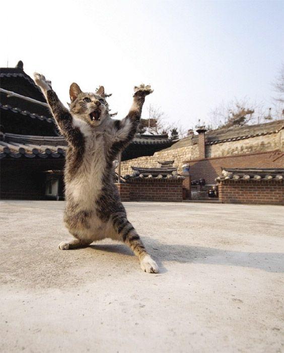 7 апреля - День рождения Джеки Чана! (60 лет)  Ки...йяяяя.......