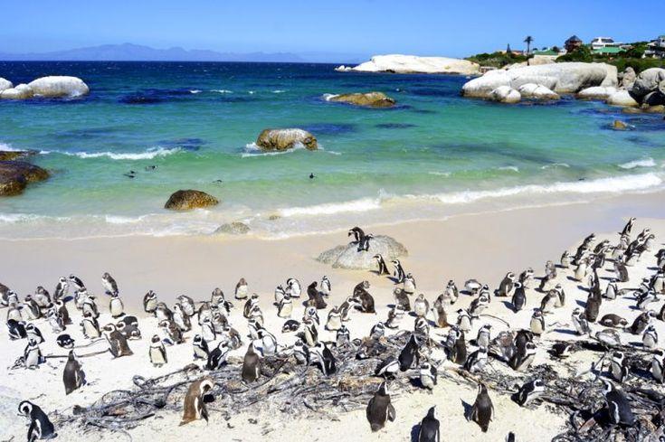 Kapstadt SehenswГјrdigkeiten Top 10