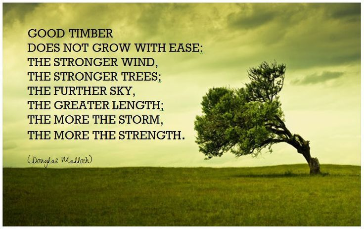Good Timber Does Not Grow At Ease - part of a long project to read through all the LDS General Conference talks, a session per week. This one has a good poem and a wonderful message. http://difficultrun.nathanielgivens.com/2015/12/08/good-timber/