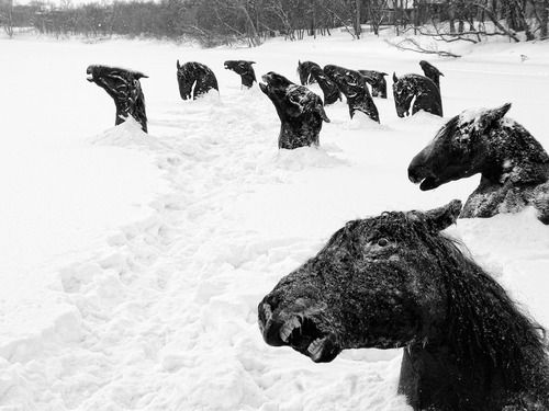 """During 1926 cold winter, all the horses from the hippodrome fled away after the stables went on fire. Their only scape-way was the river. But they all froze before managing to reach the opposite side. Their sculptural heads with terror still in their eyes served as a leisure park that season. I wonder in which moment the following spring carried them out into the sea, without anyone noticing."""" By Guy Maddin"""