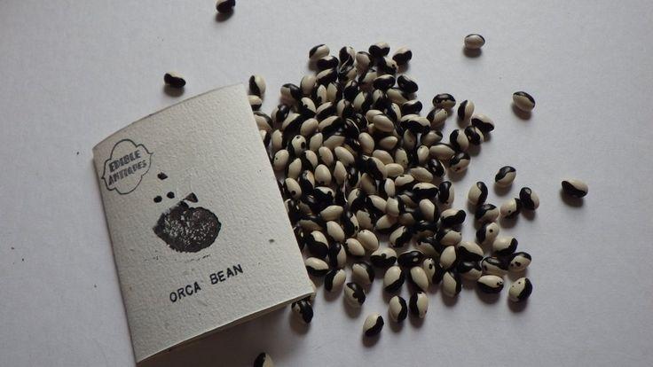 """""""Orca"""" Bean Seeds"""