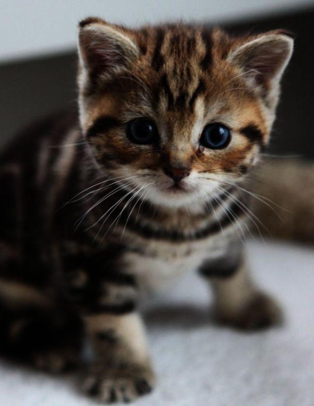 Cute Cat Japanese Emoji Cute Kittens Love