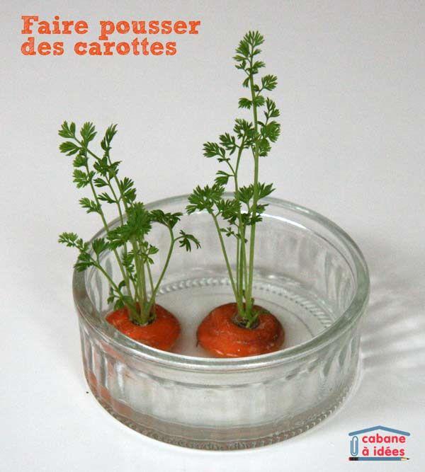 Loin de moi l'idée de vous faire faire un jardin potager ! Mais cette expérience vous prendra 5 minutes et occupera vos enfants bien deux semaines ! L'idée : récupérer les bouts de carottes et les laisser dans un peu d'eau, les fanes vont repousser. Instructions  Vous aurez besoin d'une assiette creuse, d'eau et de carottes (récupérer les bouts de celles que vous aurez utilisées pour une soupe!) Placez les bouts (ceux d'en haut de la carotte) dans l'assiette creuse et ajoutez de l'eau : il…