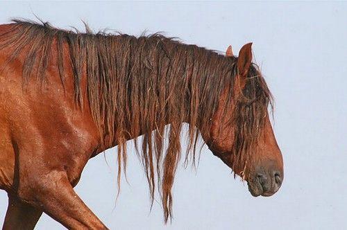 Manych-Gudilo Lake horse (Rostov, Russia) Дикие мустанги в заповеднике «Ростовский».