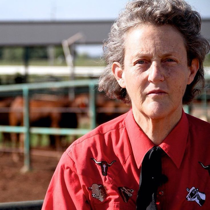 """КИНОВТОРНИК! Сегодня мы предлагаем провести вам вечер за просмотром потрясающего фильма-биографии о Темпл Грандин - аутистке которая стала одним из ведущих ученых в области сельскохозяйственной промышленности по гуманному обращению со скотом. ----------- Невероятная история женщины открывшая целую эпоху гуманного животноводства в США  и изменившая отношение общества к аутистам  и легла в основу фильма """"Temple Grandin"""". Этот фильм не показывали в кинотеатрах потому что его снял телеканал HBO…"""