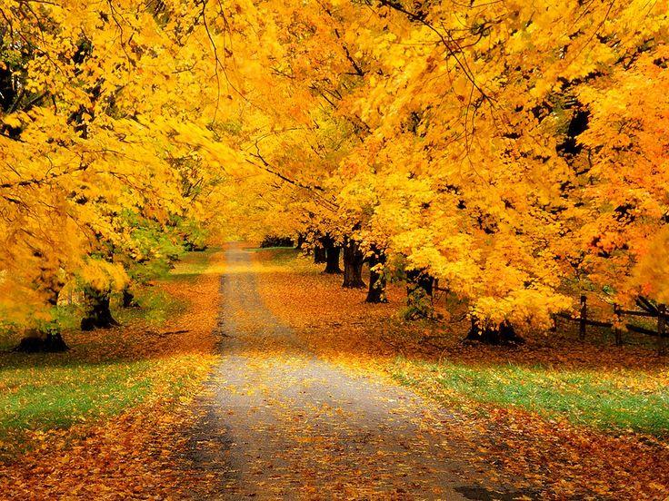 autumn.jpg (1600×1200)
