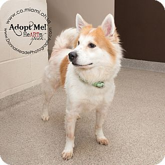 URGENT!  I am at a kill shelter in Troy, OH - Husky Mix. Meet Rudy, a dog for adoption. http://www.adoptapet.com/pet/12027383-troy-ohio-husky-mix