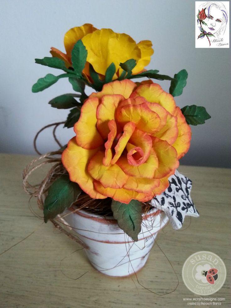 Petroschi-Trandafir (4)