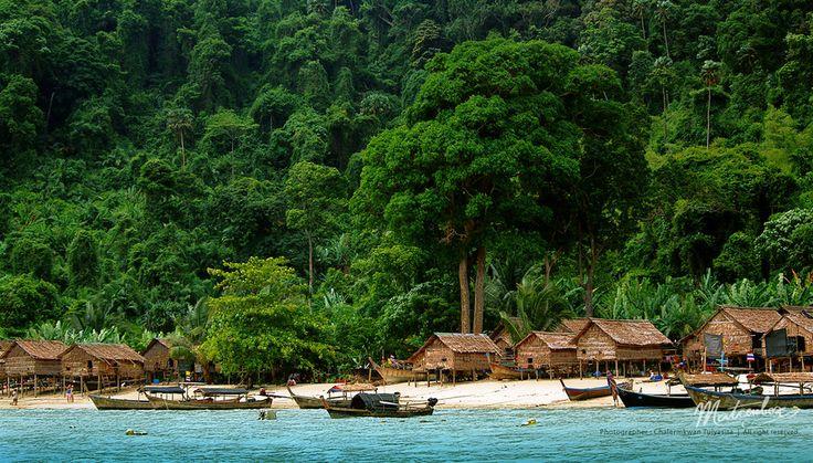 Moken Village, Surin Islands (Mu Ko Surin National Park), Pang Nga, Thailand -   The big tree is a mango tree.