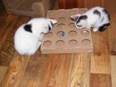 Znalezione obrazy dla zapytania jak zrobić zabawkę dla kota