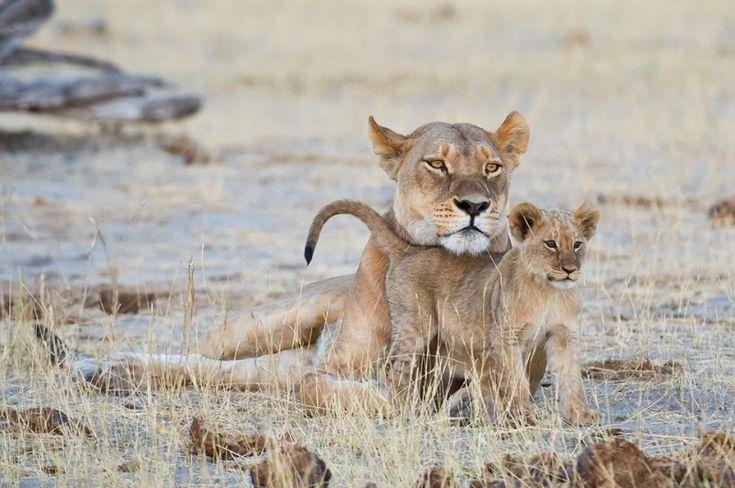 Botswana Safaris Okavango Delta deutsch   travel-friends.com :: Urlaub bei Auswanderern