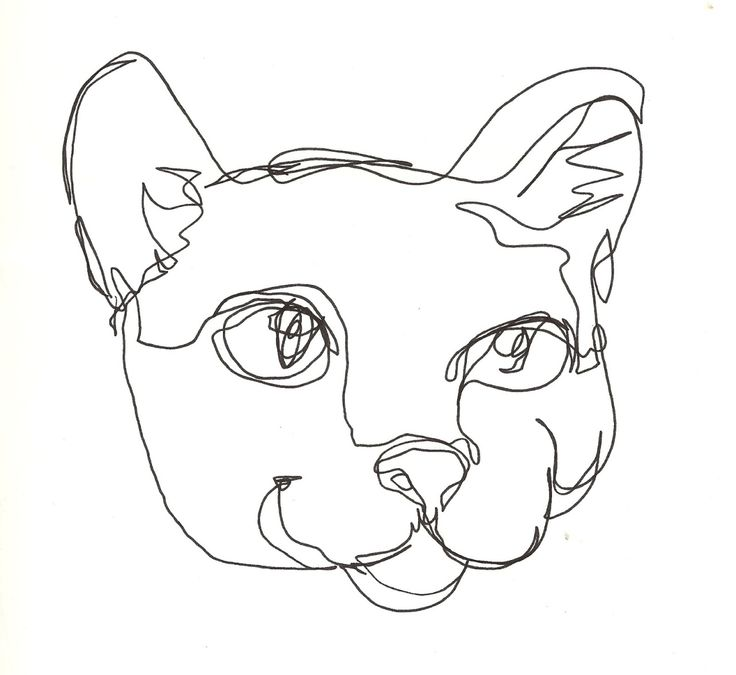 "Cross Contour Line Drawing Definition : ""blind contour of my cat boo artist kelsea aeslek"