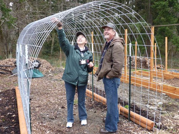 Sweet pea/green peas tunnel.  Metal fence stakes are supporting wire frame