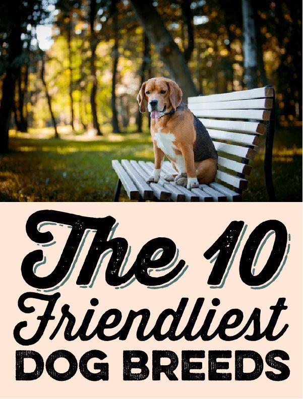 The 10 friendliest dog breeds!