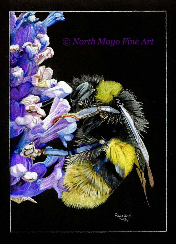This is a coloured pencil drawing called 'Buzzy Bee'