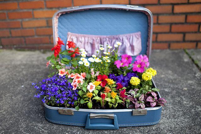 Suitcase Flower Garden