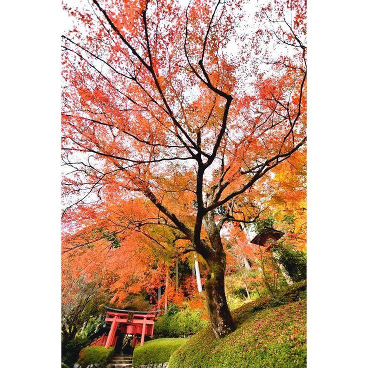 初めての場所はドキドキします。 行き方やバスも乗り馴れてない。 久しぶりの1人。 紅葉は少し見頃が過ぎたような気もします。 こんな行きにくい場所なのにたくさんの人が。 さすが善峯寺。 #lovers_nippon #instagood #instagram #japan_photo_now #team_jp_ #team_jp_西 #igersjp #japan_of_insta #nikonphotography #phos_japan #icu_japan #wu_jp #loves_united_japan #bestphoto_japan #japan_art_photography #japan_daytime_view #kyoto_style #japan #kyoto #kyotojapan #kyotographie #loves_united_kyoto #art_of_japan_ #wu_japan #loves_united_asia #ひろがり同盟 #京都西山善峯寺 #善峯寺 #紅葉