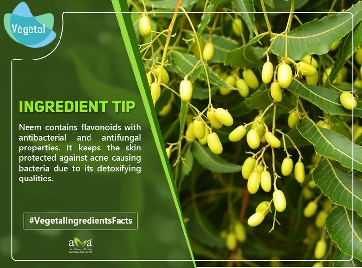 #VegetalIngredientsFacts #Neem contains flavonoids with antibacterial and antifungal properties. It keeps the skin protected against acne-causing bacteria due to its detoxifying qualities. #VegetalPersonalCare #Products are extracts of #NaturalHerbs & are #ChemicalFree  For more details: http://bit.ly/2kJu7h9