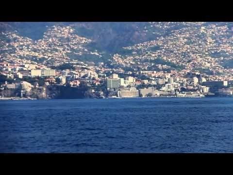 VMT Madeira - Catamaran Trips, Dolphins Madeira, Whales Madeira, Dolphin and whale watching, Catamaran Trips