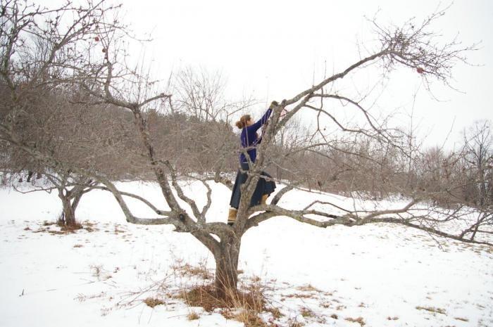 DIY: Pruning Fruit Trees in Winter Gardenista
