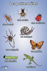 Poster - Les petites bêtes